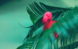 Roze flamingostuk speelgoed tussen palmbladeren Minimaal de zomerconcept stock foto