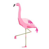 Roze flamingovogel over witte achtergrond Stock Afbeelding