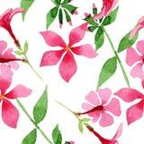 Roze flox foral botanische bloem Waterverf achtergrondillustratiereeks Naadloos patroon als achtergrond stock illustratie