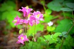 Roze Forest Wildflowers Royalty-vrije Stock Afbeeldingen
