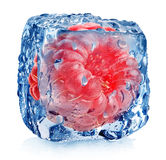 Roze framboos in ijs Stock Afbeelding