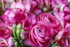 Roze fresia en Perzische boterbloemenbloemen Royalty-vrije Stock Foto's