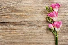 Roze fresiabloemen op hout royalty-vrije stock foto