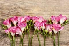 Roze fresiabloemen op hout royalty-vrije stock fotografie
