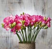 Roze fresiabloemen op houten achtergrond Royalty-vrije Stock Foto