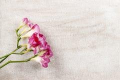 Roze fresiabloemen op houten achtergrond Stock Afbeeldingen