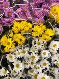 Roze geel en margrieten op de markt stock foto's