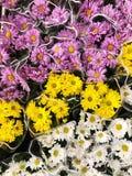 Roze geel en margrieten op de markt royalty-vrije stock fotografie