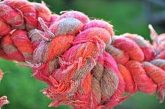 Roze gekauwde knoop voor honden Stock Fotografie