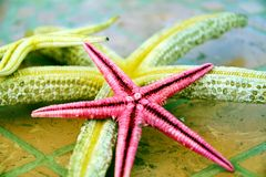 Roze gele overzeese sterren in grijze tinten Sluit omhoog stock fotografie