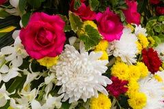 Roze gemengde rozen stock afbeeldingen
