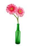 Roze Gerber-Madeliefjes Royalty-vrije Stock Fotografie