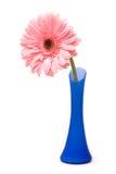 Roze gerberbloem Royalty-vrije Stock Foto's