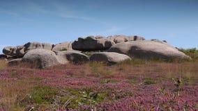 Roze granietrotsen in Ploumanach Bretagne Frankrijk stock video