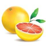 Roze grapefruit stock illustratie