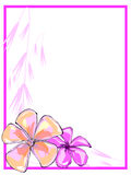 Roze Grens Plumerias Royalty-vrije Stock Foto