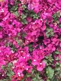 Roze Groene Aardmuur Stock Foto