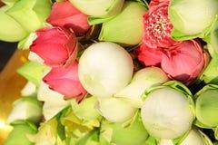 Roze groene lotusbloem Stock Foto