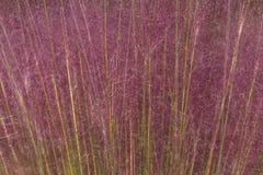 Roze Haargras voor een Geweven Achtergrond Stock Afbeeldingen