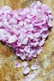 Roze hart van roze bloemblaadjes, concept voor Valentijnskaarten royalty-vrije stock foto