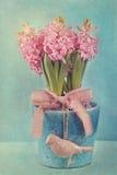 Roze hyacinten Stock Afbeelding