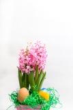 Roze hyacinten en paaseieren Stock Fotografie