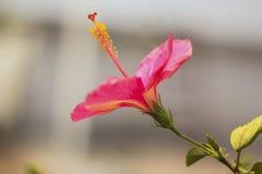 Roze kleurenbloem stock foto