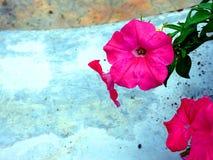 Roze kleurrijke bloemen royalty-vrije stock fotografie