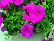 Roze kleurrijke bloemen royalty-vrije stock afbeeldingen