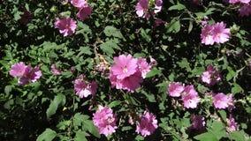 Roze kleurrijke heldere bloemen Stock Afbeelding