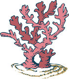 Roze koraal Stock Fotografie