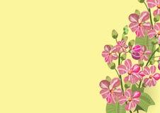 Roze lagerstroemia en varen op witte achtergrond royalty-vrije illustratie