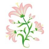 Roze lelie Royalty-vrije Stock Afbeelding