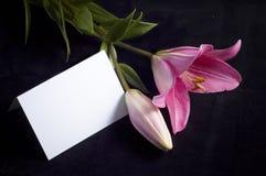 Roze lelie en prentbriefkaar Royalty-vrije Stock Foto