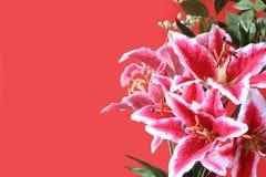 Roze lelieprentbriefkaar Stock Foto's
