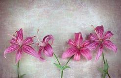 Roze leliesbloemen stock foto's