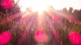 Roze lichte stralen en gloed over de gebieden royalty-vrije stock foto