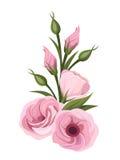 Roze lisianthusbloemen Vector illustratie Stock Afbeeldingen