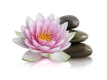Roze Lotus en Opgepoetste Stenen Stock Afbeeldingen
