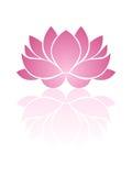 Roze lotusbloem. Royalty-vrije Stock Afbeeldingen