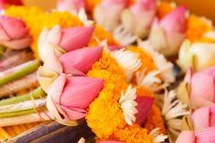 Roze lotusbloembloem royalty-vrije stock foto