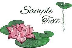 Roze lotusbloembloem Royalty-vrije Stock Afbeelding