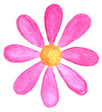 Roze madeliefje in waterverf stock illustratie
