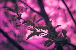 Roze magenta romantische achtergrond royalty-vrije stock afbeelding