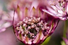 Roze Magisch Royalty-vrije Stock Foto