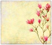 Roze magnoliabloemen op oud document Stock Afbeelding