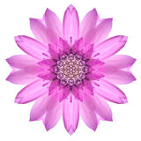 Roze Mandala Flower Ornament Geïsoleerd caleidoscooppatroon Stock Afbeelding