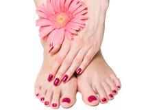 Roze manicure en pedicure met bloem Stock Afbeeldingen