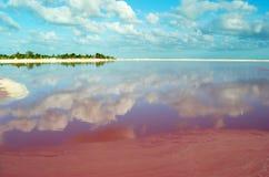 Roze meer in Mexico stock afbeeldingen