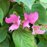 Roze Mooie bloemen, roze bloemeninstallaties, royalty-vrije stock afbeelding